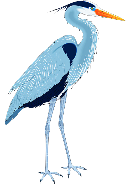 Blue-Heron-2 - trans background